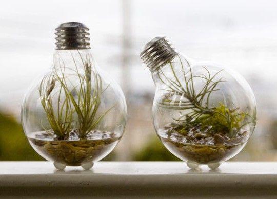 Já pensou em reutilizar as lâmpadas velhas como peças decorativas? Olha essa dica legal com plantas.
