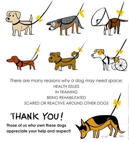 Blog writing service dog project