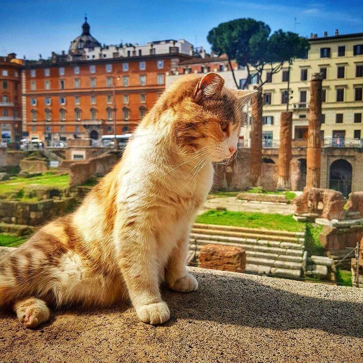 O lugar que foi cenário do assassinato de Júlio César hoje é abrigo de gatinhos sem lar. Voluntários cuidam desses lindinhos e os preparam para adoção!  . Lembre-se que nós fazemos o seu roteiro personalizado em Roma organizamos o seu transfer do/para o aeroporto e também sua hospedagem! info@emroma.com .  Veja mais no Snapchat Em_Roma  #Roma #europe #instatravel #eurotrip #italia #italy #rome #trip #travelling #snapchat #emroma#viagem #dicas #ferias #dicasdeviagem #brasileirospelomundo…
