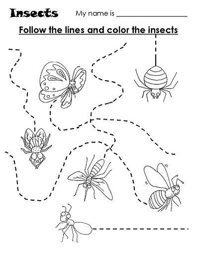 Lámina insectos