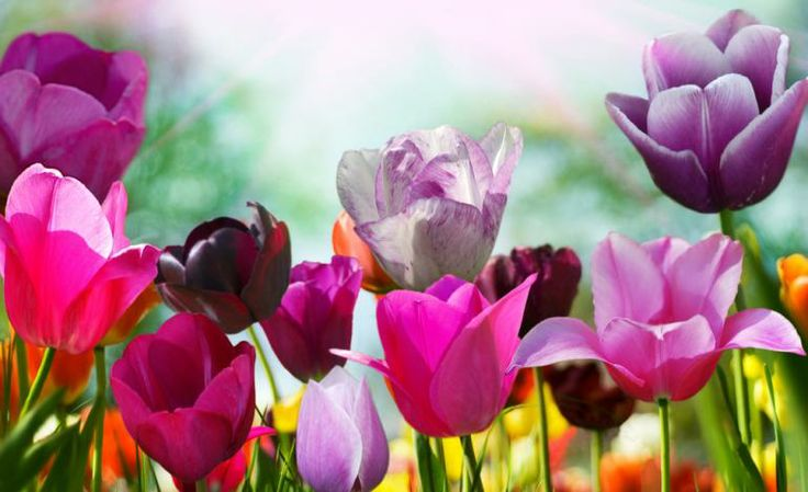 What Does Spring Equinox Mean? 8 Fast Facts About First Day Of Spring