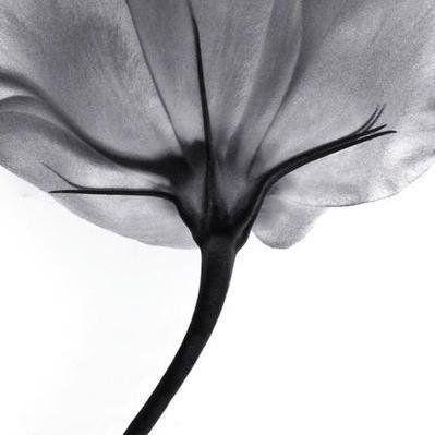 18 best Blumen fotografieren   Blumenfotografie   Flower Photography ...