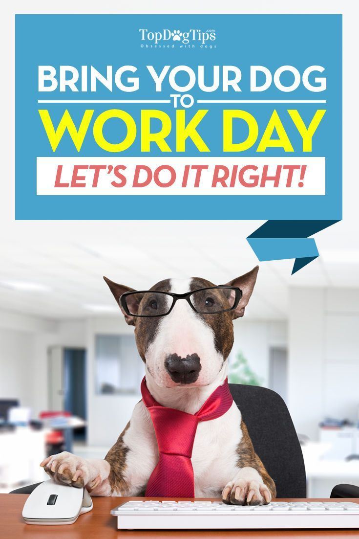 Take Your Dog To Work Day Building Awareness Of Shelter Dogs Top Dog Tips In 2020 Taking Dog Pet Sitters International Dogs