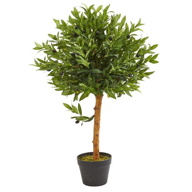 Nearly natural 34 in indooroutdoor olive topiary