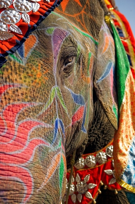 Decorated Indian Elephant at Hindu Festival in India -  as a sign of respect for God. Hindus believe God pervades in everything as everything was created by God, hence animals are held sacred in India and are most respected with Hindu art, decorations and paintings. #Hinduism #India