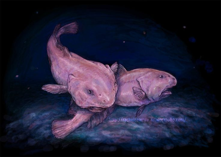 1000 images about narwhals and blob fish on pinterest for Ugly fish blob
