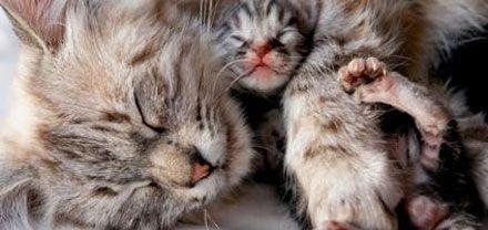 Первая кошка - Беременность кошки.  Подача убитой и подраненной дичи - врожденное его качество, штат Монтана.  Животное может получать лекарства только в экстренных случаях по назначению врача.