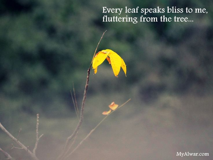 Even if something is left undone, everyone must take time to sit still, and watch the leaves turn! #leaves #tree #weather #yellow #plant #nature