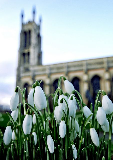Welcome Spring! by Serge Freeman Snowdrops by St. Georges Parish church, Kidderminster, England, UK