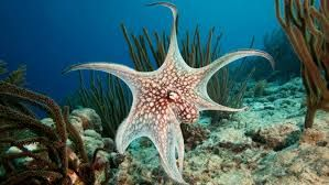 Image result for what do octopus eat