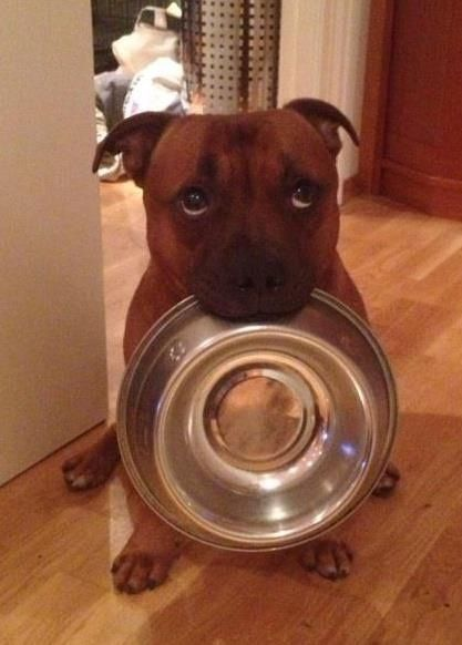 I'm asking you as nicely as I can. Put something in this bowl now or expect a rather large surprise on your pillow. Got It?