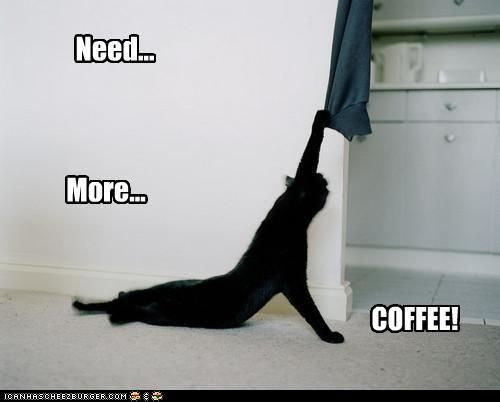 funny pictures - Need... More... COFFEE!