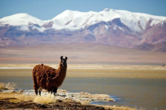 salar de Tara / San Pedro de Atacama