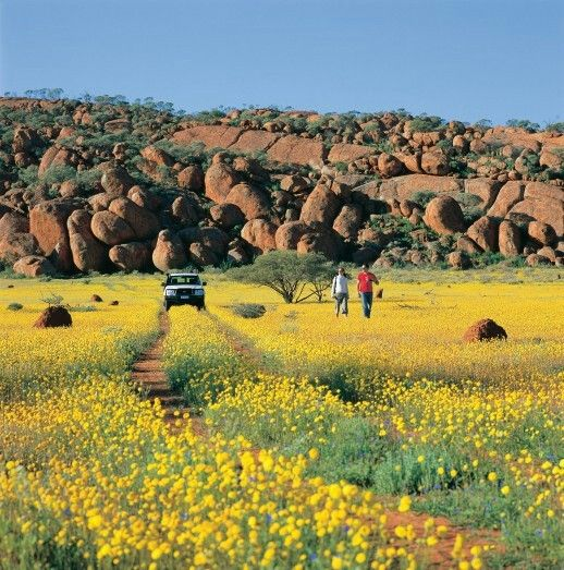 When July hits, the West Australian outback comes to life with unique and colourful flowers, all begging to be appreciated. There are many different ways to see these beautiful wild flowers, right up until September. A personal travel manager is the best way to ensure you can stop and smell the roses.