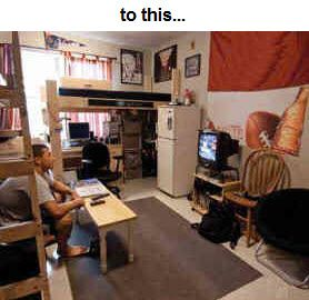 Loft Bed  Bunk Beds for Home  College - Made in USA