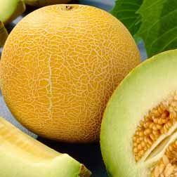 Melon 'Outdoor Wonder'