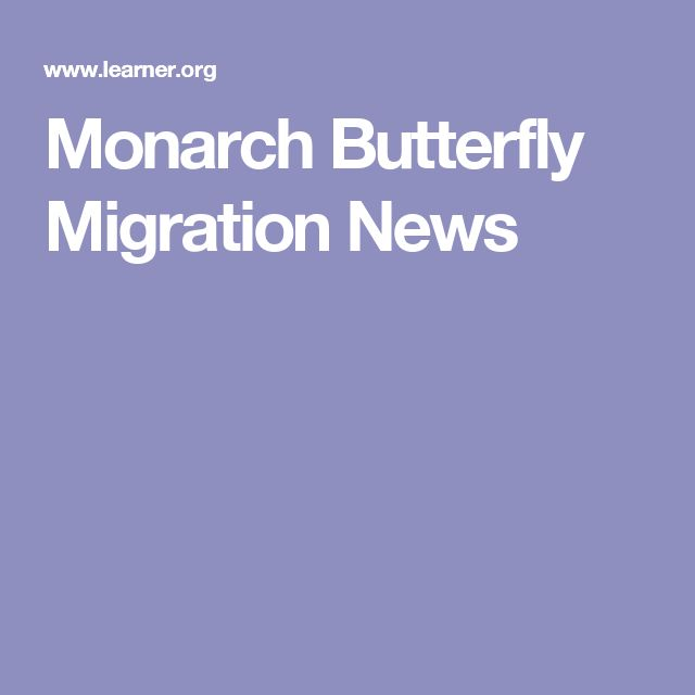Monarch Butterfly Migration News