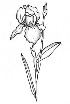 Image result for iris flower line drawing