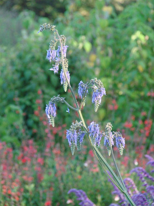 Outdoor Gardens Landscaping Drought Tolerant