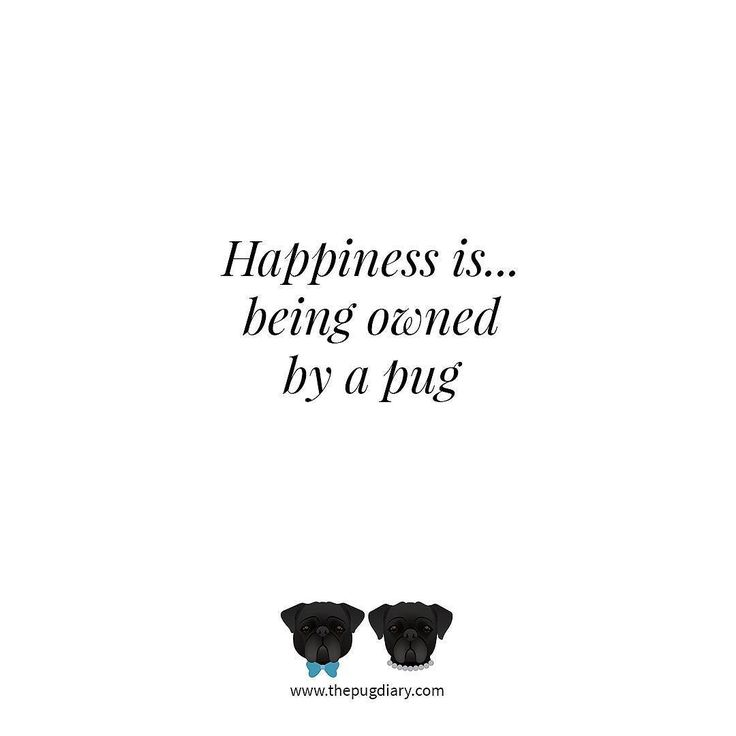 Or two or three. #thepugdiary