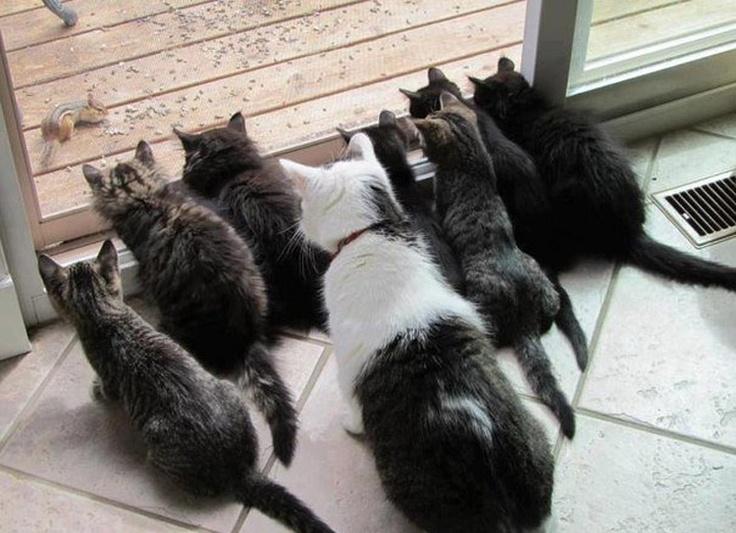 soon: Sliding Glasses Doors, The Doors, Squirrels, The Zoo, Chipmunks, Kittens, Tvs, Animal, Cat Lady