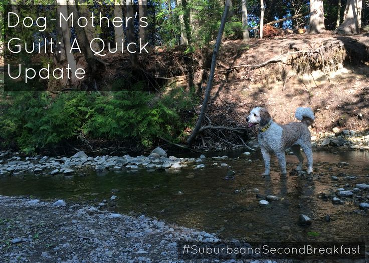 Dog-Mother's Guilt: A Quick Update    #SuburbsandSecondBreakfast #lifestyle #personal #blog #dogs #dogmom #furmom #mothersguilt #dogmothersguilt