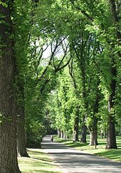 Fitzroy Gardens. Melbourne's urban structure features large parks and gardens and wide avenues.