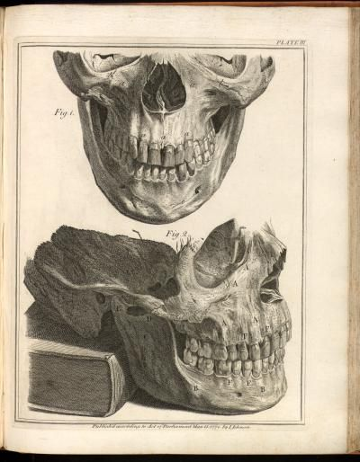 The foundation of modern dentistry    Descriptive Title:Skull and mandible.  Artist:Rymsdyk, Jan van, fl. 1750-1788  Technique:engraving/etching  Source:   Natural history of the human teeth / 1778.