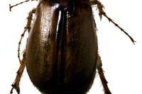 How to Keep Beetles Out of My House (5 Steps) | eHow