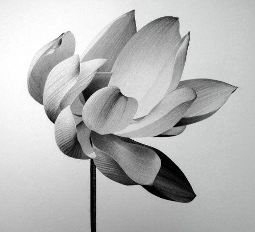 Jonathan Delafield Cook - Guyana  Lotus II