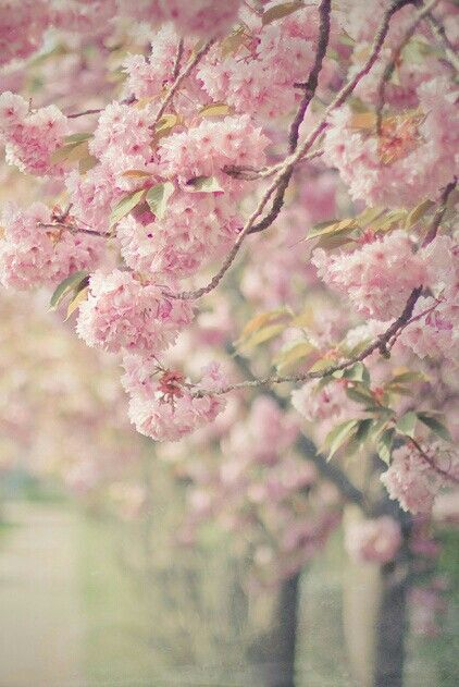115 best Spring Inspiration images on Pinterest | Floral ...