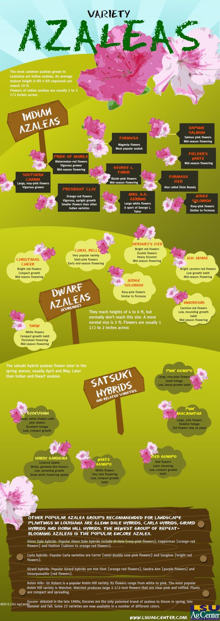 Variety of Azaleas- Azaleas, the major ornamental plants in Louisiana's residential and commercial landscapes, are available in many flower colors, growth habits and foliage characteristics. This #infograph coveries the various varieties for Louisiana gardens. Created with @Piktochart