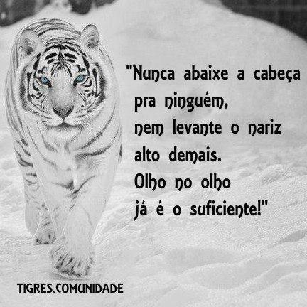 frases de tigres comunidade on Pinterest | Leis, No Face and Ems