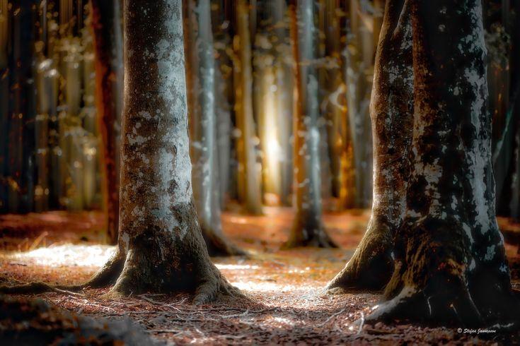 https://flic.kr/p/AKDP3n | Light in between old trees