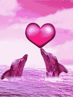 Lovey dovey dolphins
