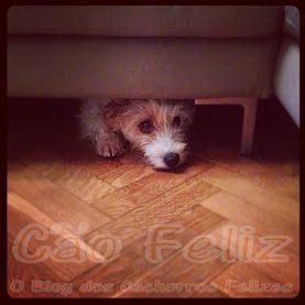 Como lidar com o Medo dos cães série de 3 post's