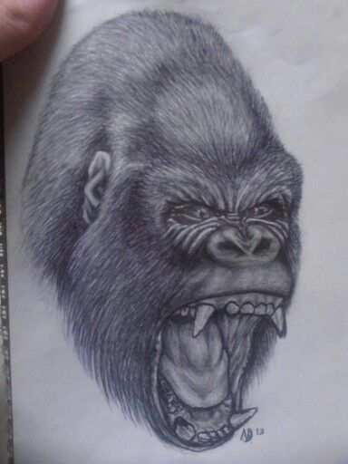 Silverback gorilla by Nickki De Smet