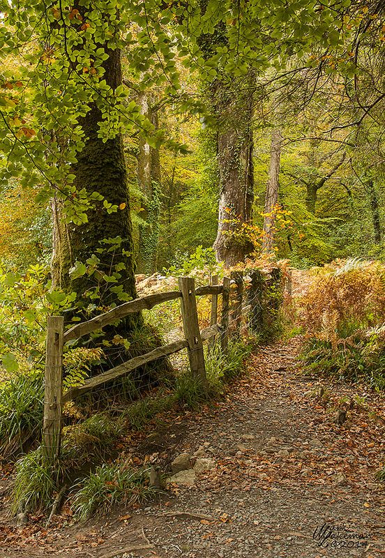 ˚Woodland Wonders, Riverside Path - Dartmoor, England <3