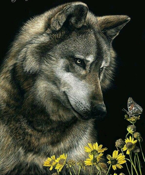 Beautiful wolf and butterfly