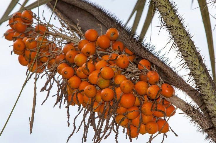 awara fruit