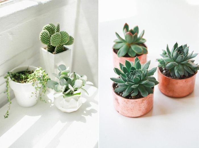à propos de Pot À Plante Grasse sur Pinterest  Culture de plantes ...
