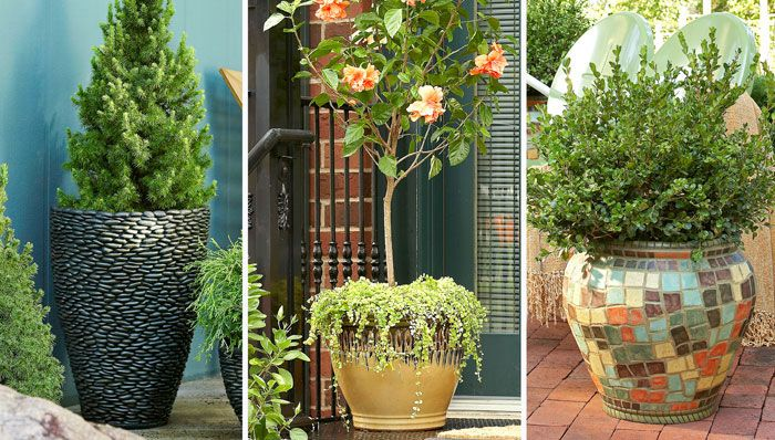 outdoor potted plant ideas | http://www.finegardening.com/plants/articles/10-plants-for-year-round ……Love the draped plant