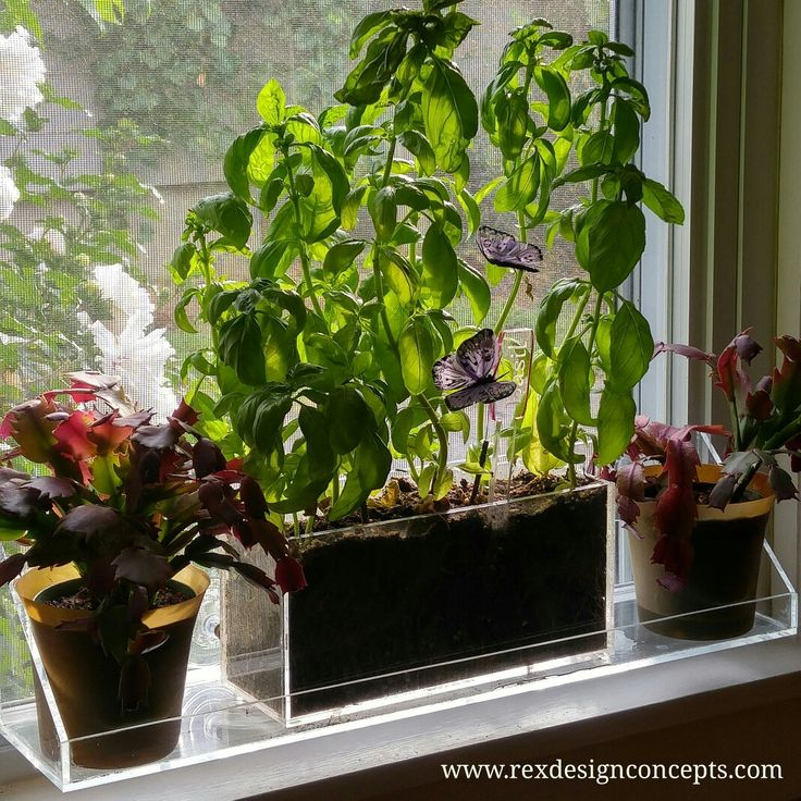 Growing Made Simple. Container Gardening