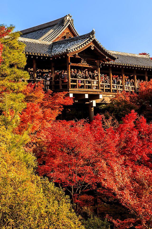 Kyoto Tofukuji Temple (東福寺)