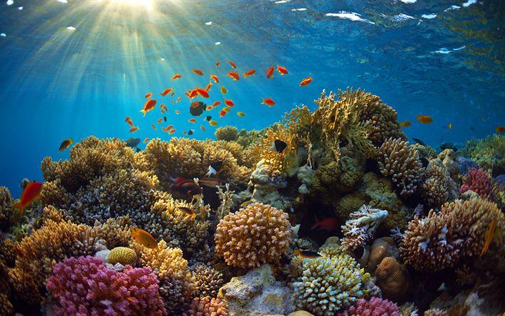 Download imagens mundo subaquático, recife de coral, mar, peixe