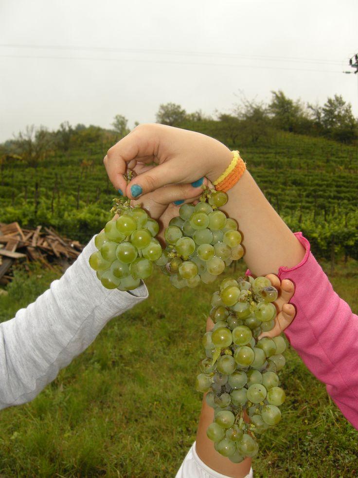 cin cin prosit with grape, not wine