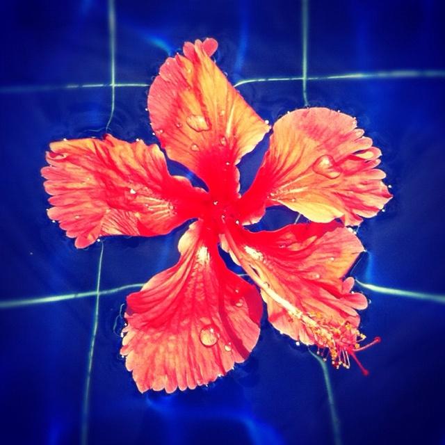Swimming Flower