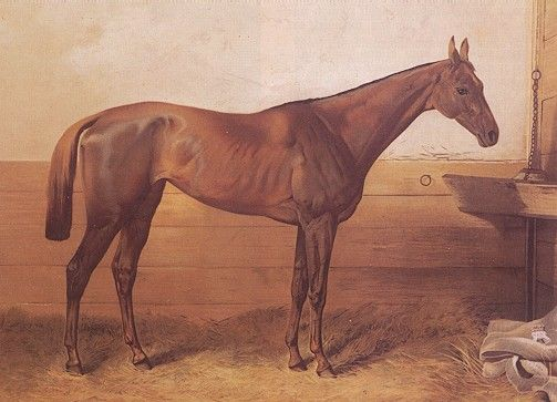 Kincsem (pron. keen-tshem), the Hungarian bred racing horse won all of her 54 races! People just remember her as the 'Undefeatable'.