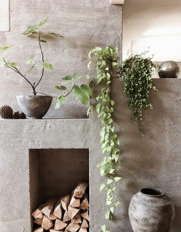 Les 205 meilleures images du tableau plantes retombantes for Plantes vertes retombantes