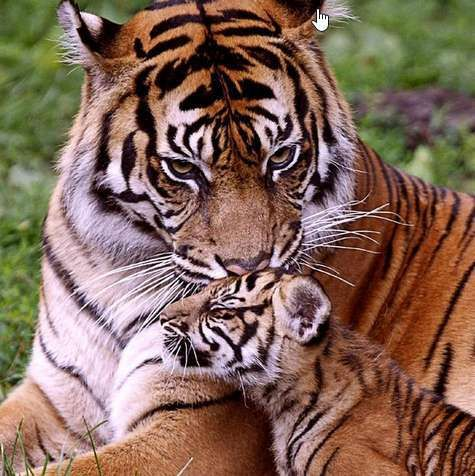 Best Zoo Animals Images On Pinterest Names Of Animals - 22 adorable parenting moments in the animal kingdom